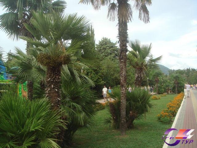 парк рядом с гостиницей